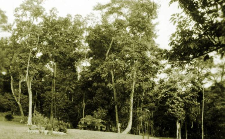 Horto Florestal - Década de 1950