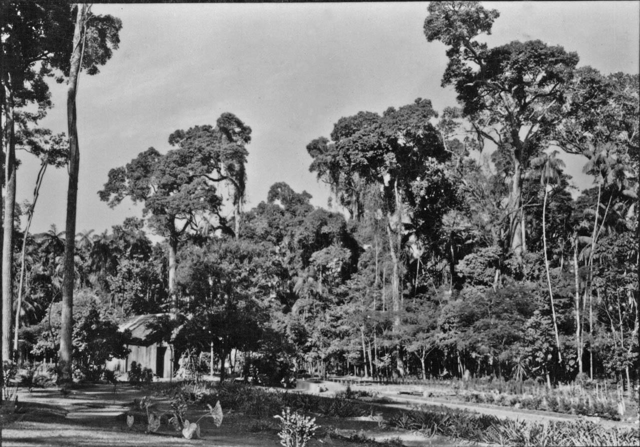 Horto Florestal Luiz Teixeira Mendes - Final da década de 1950