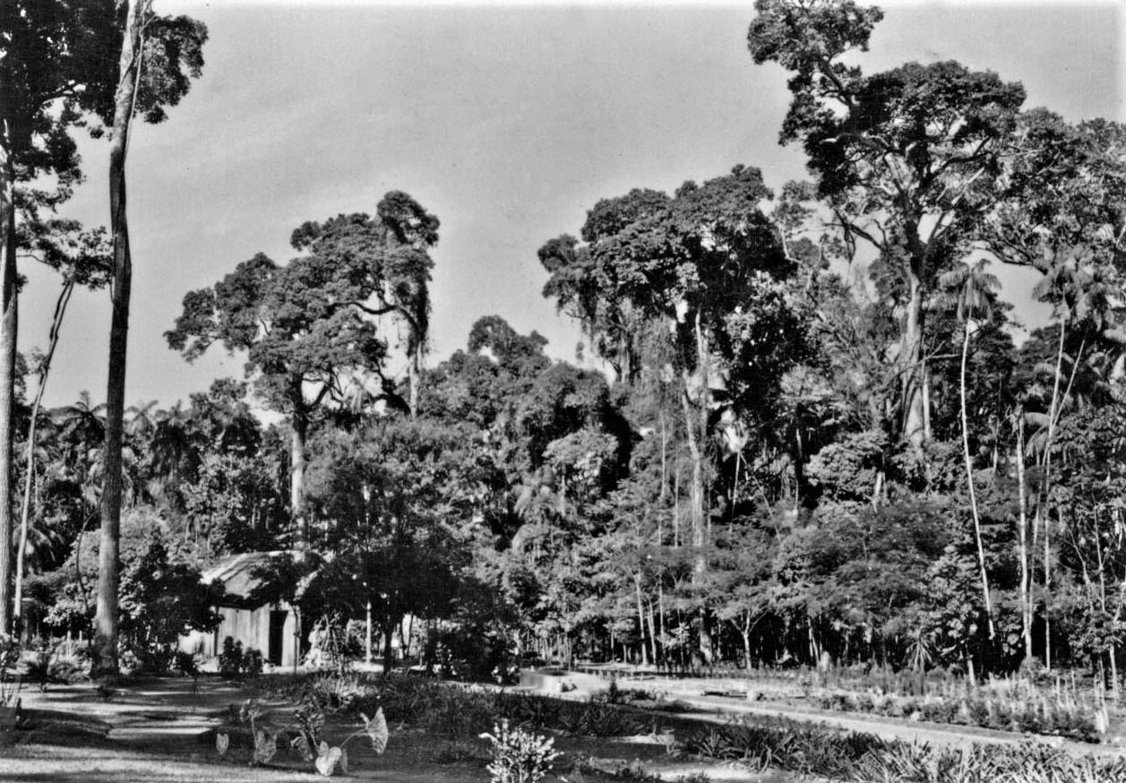 Horto Florestal - 1955