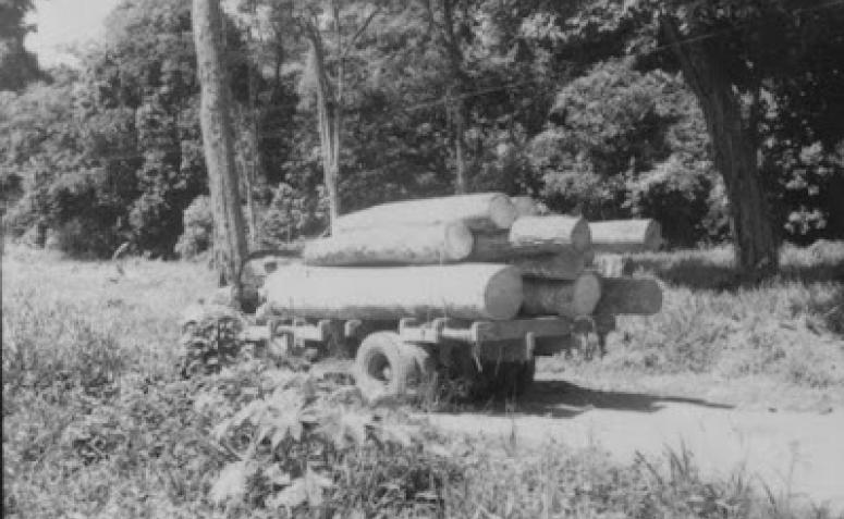Caminhão com toras - Década de 1950