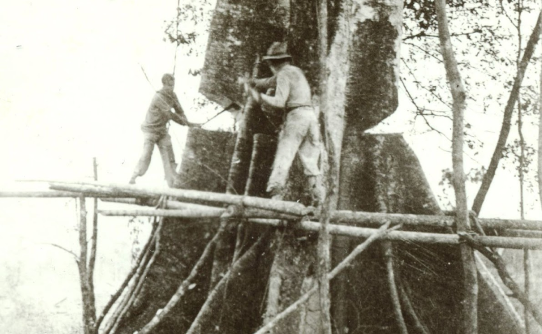 Lenhadores - Década de 1940