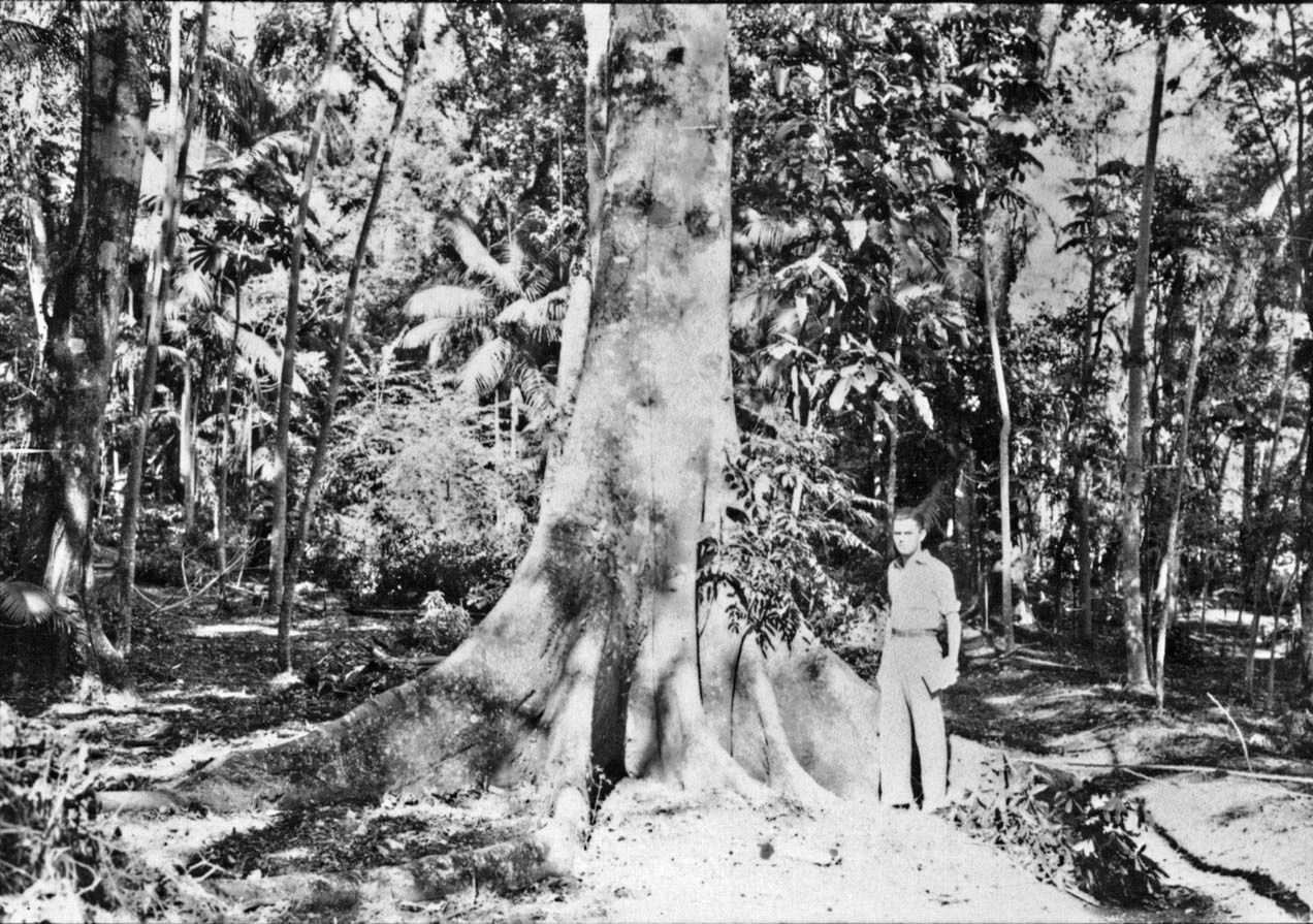 Figueira Branca - Horto Florestal