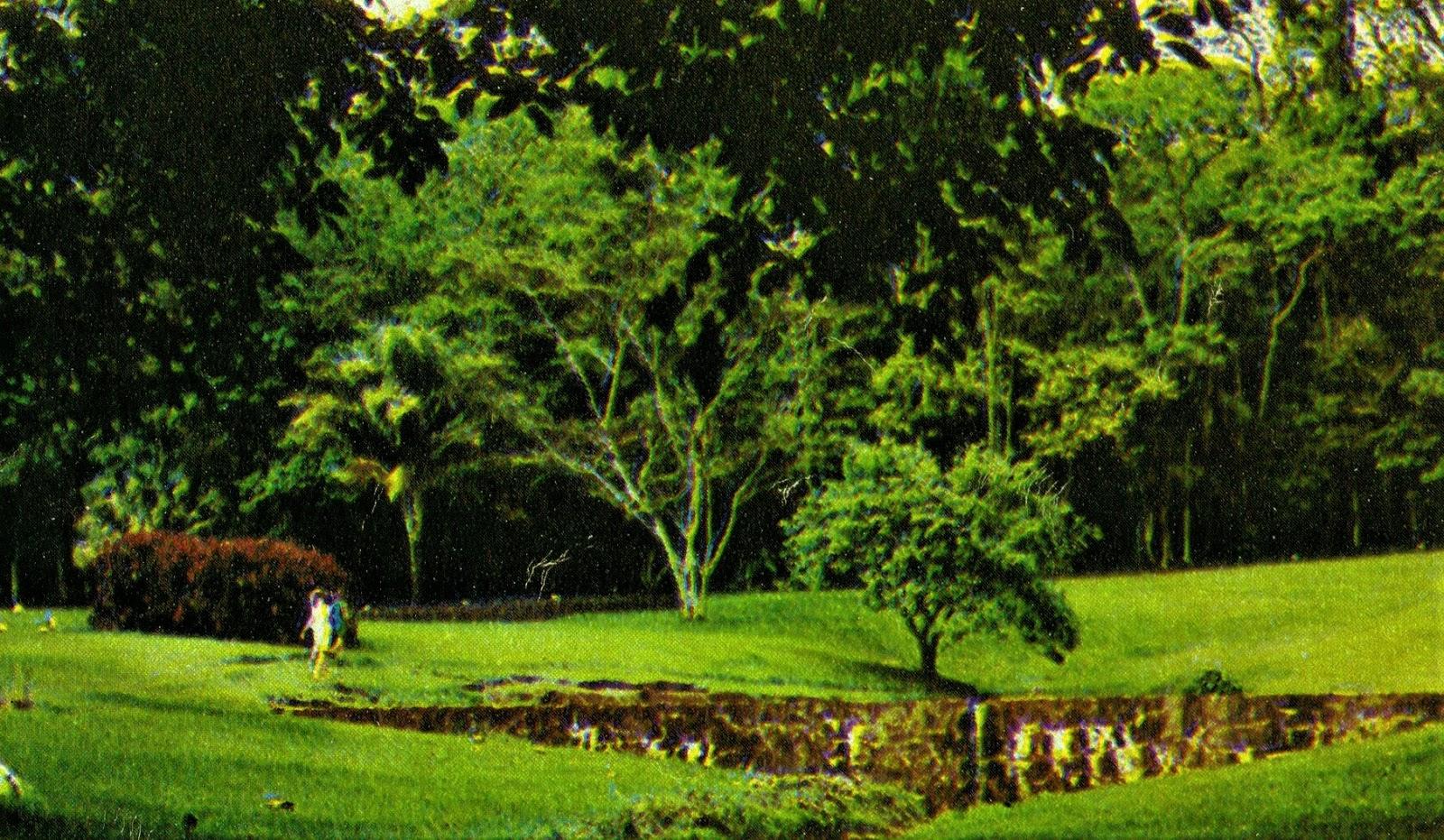 Interior do Horto Florestal - 1972
