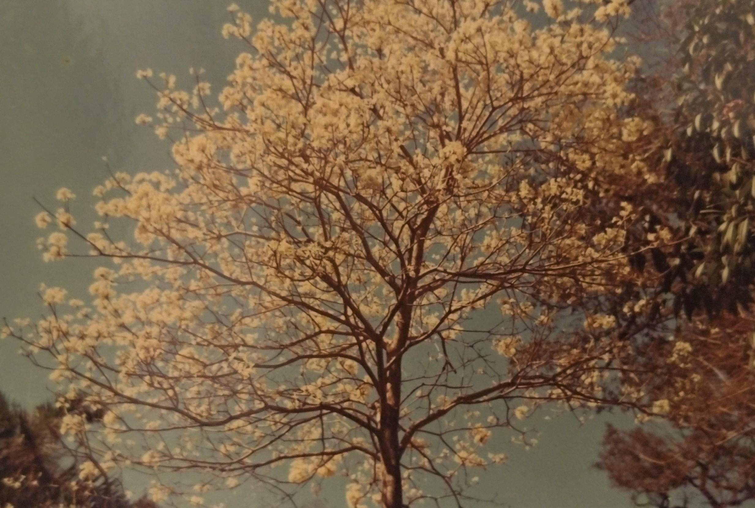 Detalhes do Horto Florestal - Década de 1960