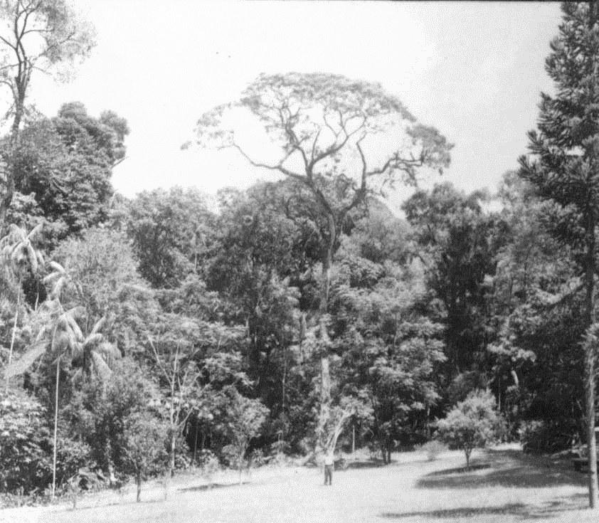 Horto Florestal - 1960