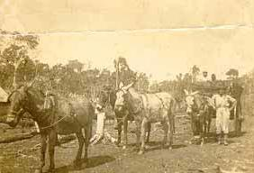 1943: 1º Carroceiro de Maringá